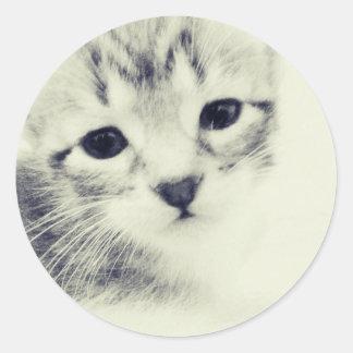Baby Kittens Round Sticker