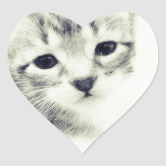 Baby Kittens Heart Stickers