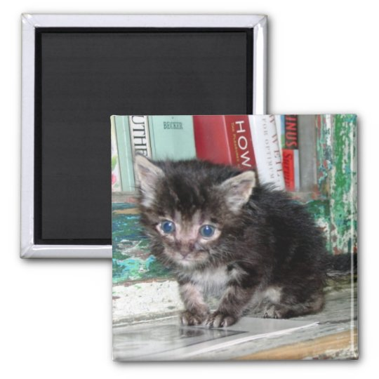 Baby Kitty Square Magnet