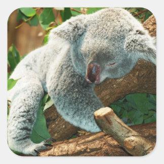 Baby Koala Bear Sleeping in a Tree Square Sticker