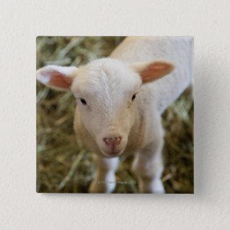 Baby Lamb 15 Cm Square Badge