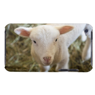 Baby Lamb Barely There iPod Cases