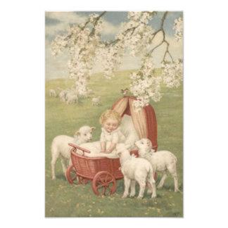 Baby Lamb Dogwood Tree Field Photographic Print