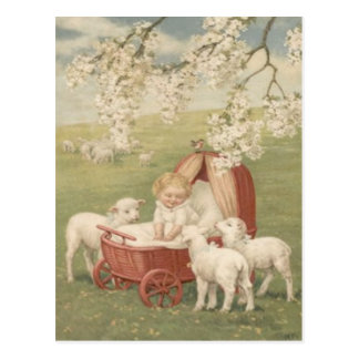 Baby Lamb Dogwood Tree Field Postcard
