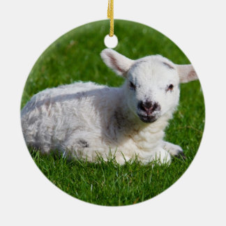 Baby lamb in grass christmas ornament