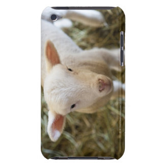 Baby Lamb iPod Case-Mate Case