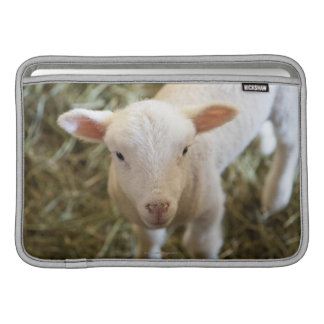 Baby Lamb Sleeve For MacBook Air