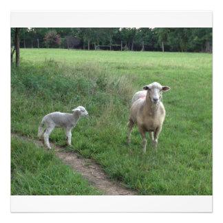 Baby lamb with Ewe Art Photo
