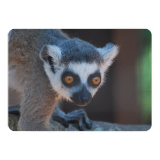 Baby Lemur 13 Cm X 18 Cm Invitation Card