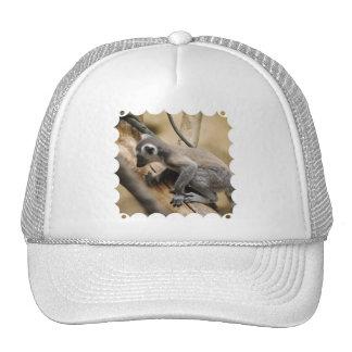 Baby Lemur  Baseball Hat