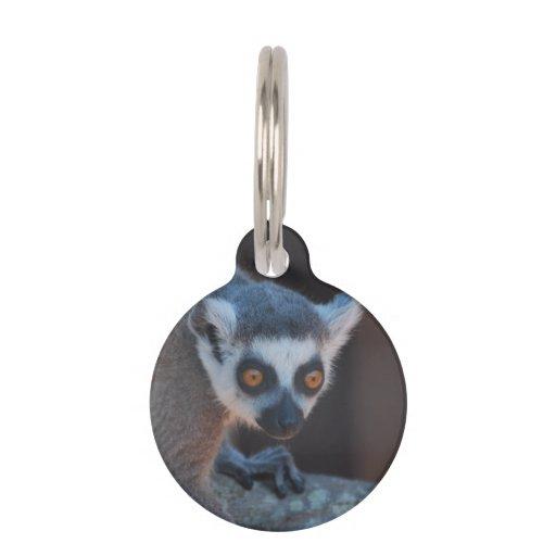Baby Lemur Pet Nametag