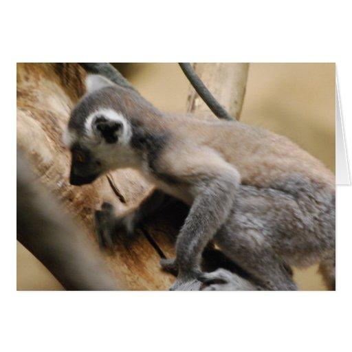Baby Lemur  Greeting Card