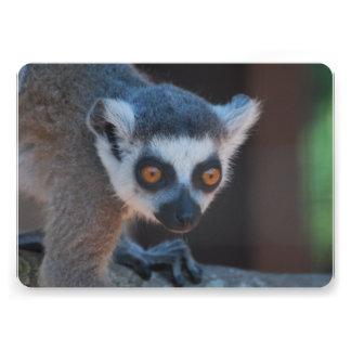 Baby Lemur Announcement