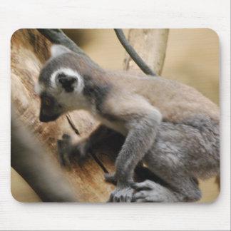 Baby Lemur  Mouse Pad
