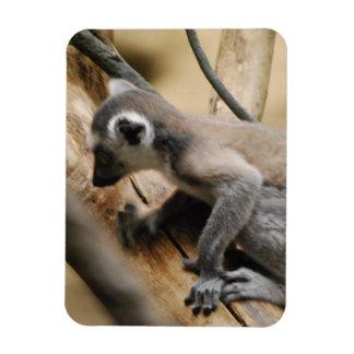 Baby Lemur Premium Magnet Flexible Magnets