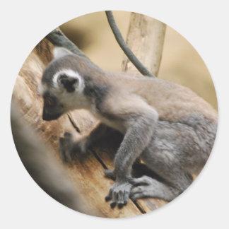 Baby Lemur  Stickers