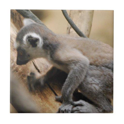 Baby Lemur Tile