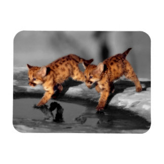 Baby Leopards Rectangular Photo Magnet