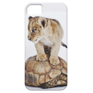 Baby lion standing on tortoise, white background iPhone 5 case