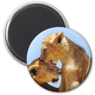 Baby lions love 6 cm round magnet