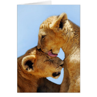 Baby lions love greeting card