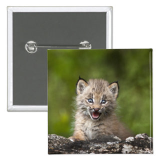 Baby Lynx  Looking Over A Fallen Tree 15 Cm Square Badge