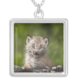 Baby Lynx  Looking Over A Fallen Tree Silver Plated Necklace