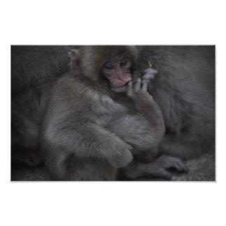 Baby Macaque, Macaco Bebe Photograph