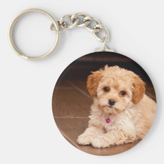 Baby Maltese poodle mix or maltipoo puppy dog Basic Round Button Key Ring