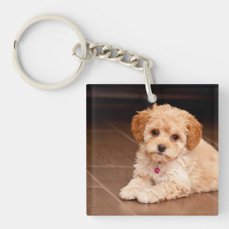 Baby Maltese poodle mix or maltipoo puppy dog Double-Sided Square Acrylic Key Ring