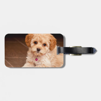 Baby Maltese poodle mix or maltipoo puppy dog Luggage Tag