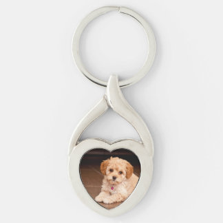 Baby Maltese poodle mix or maltipoo puppy dog Key Chains