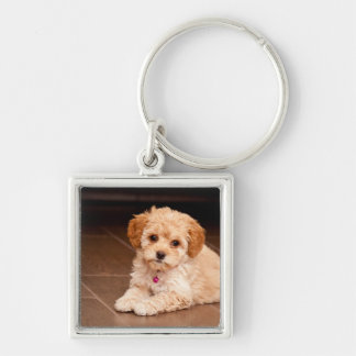 Baby Maltese poodle mix or maltipoo puppy dog Silver-Colored Square Key Ring