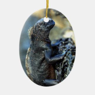 Baby marine iguana Galapagos Islands Ceramic Oval Decoration