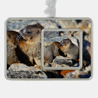 Baby Marmots Silver Plated Framed Ornament