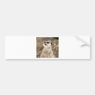 Baby meerkat car bumper sticker