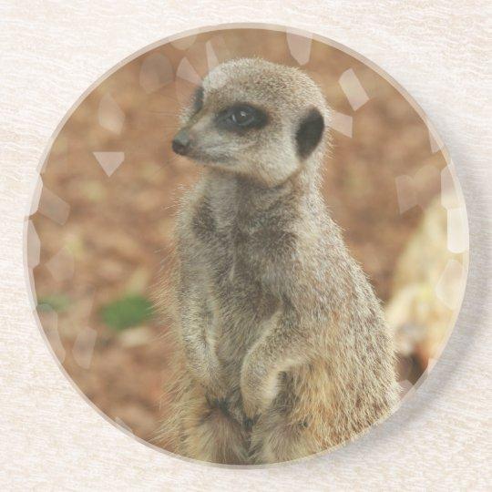 Baby Meerkat Coasters