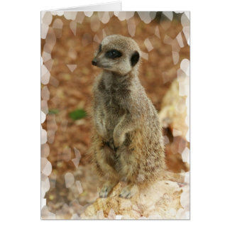 Baby Meerkat Greeting Card