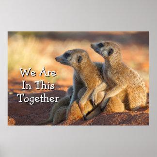 Baby Meerkats Hide Under Their Parents Poster