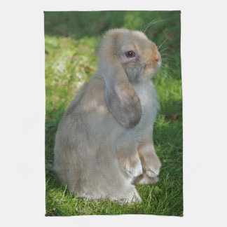 Baby Minilop Rabbit Kitchen Towel