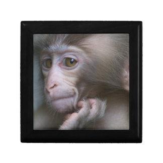 Baby Monkey Gift Box