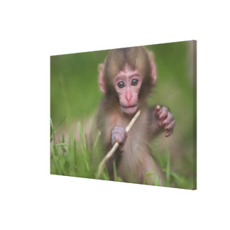 Baby Monkey Is Playing With A Twig Canvas Print