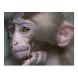 Baby monkey staring. postcard