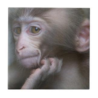Baby monkey staring. tile