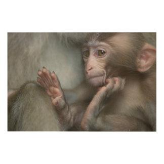 Baby monkey staring. wood print