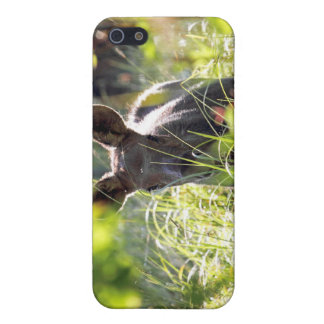 Baby Moose iPhone 5 Case