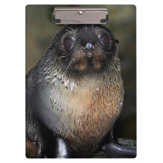 Baby New Zealand Fur Seal Clipboard