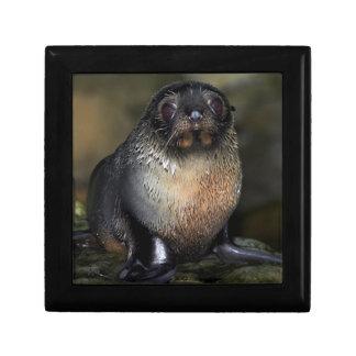 Baby New Zealand Fur Seal Gift Box