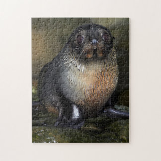 Baby New Zealand Fur Seal Jigsaw Puzzle