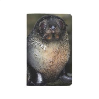 Baby New Zealand Fur Seal Journal